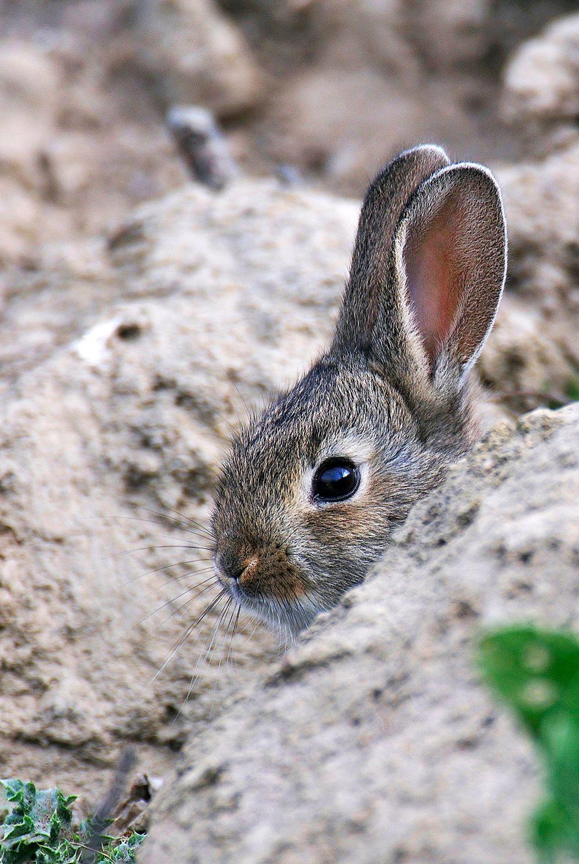 Imagen: WWF