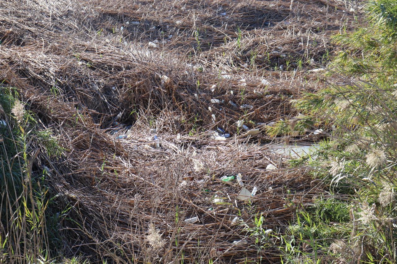 Huermur denuncia que desde hace meses el cauce del río Segura junto al monumento del Azud de la Contraparada está plagado de incontables plásticos, basuras y envases. Imagen: Huermur