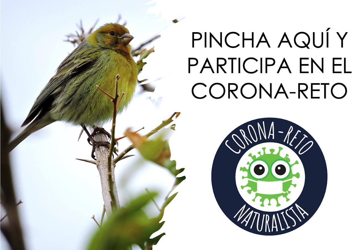 Corona-Reto naturalista: https://www.corona-reto.com/el-corona-reto