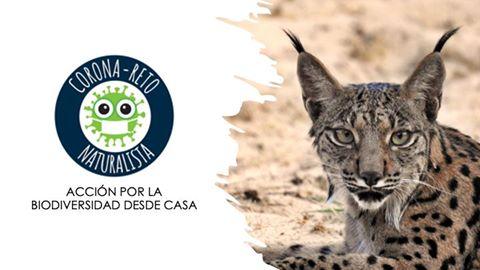 Corona-Reto Naturalista: https://www.corona-reto.com/home