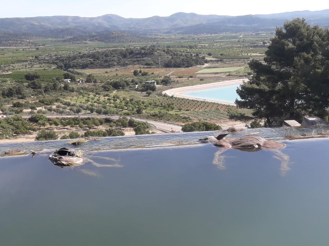 Corzos ahogados en el canal del Turia (Casinos). Imagen: Adensva