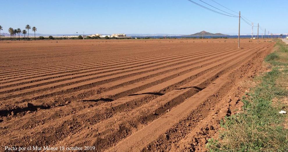 Zona de cultivo, el pasado 18 de octubre, con los surcos en dirección a la laguna. Imagen: Pacto por el Mar Menor