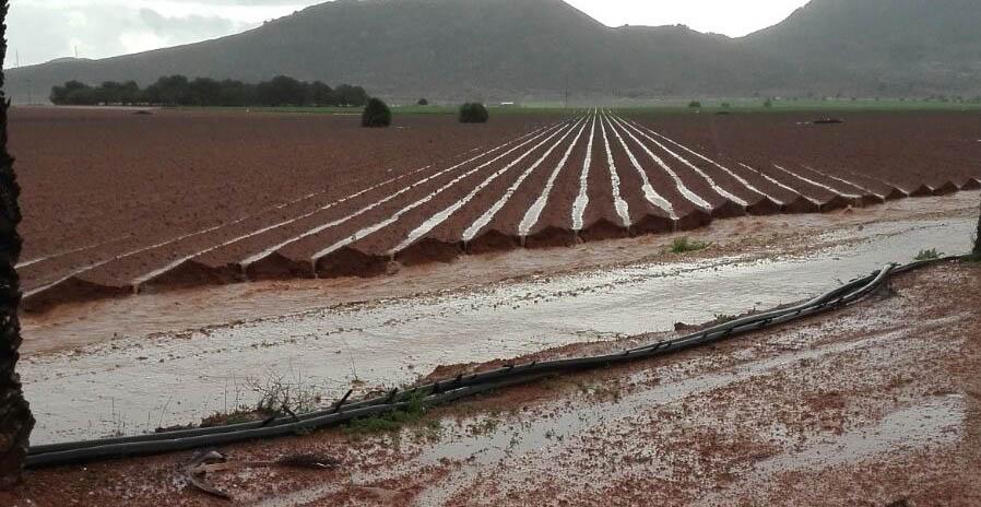 Imagen de archivo de una zona de cultivos en el entorno del Mar Menor. Imagen: Jorge Enríquez / Pacto por el Mar Menor