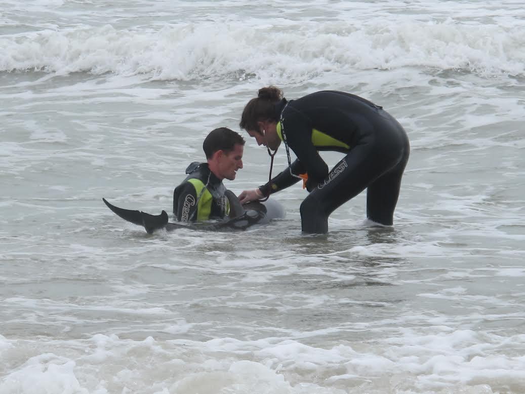 Acercamiento a un delfín enfermo. Imagen: Fundación Oceanogràfic