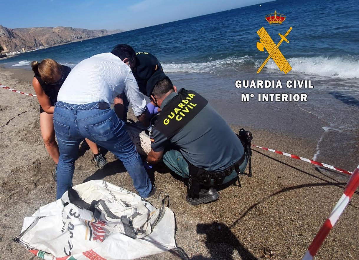 Los técnicos hallaron cuerpo sin vida de delfín listado de 1,45 m de envergadura en una playa de Almería. Imagen: Guardia Civil