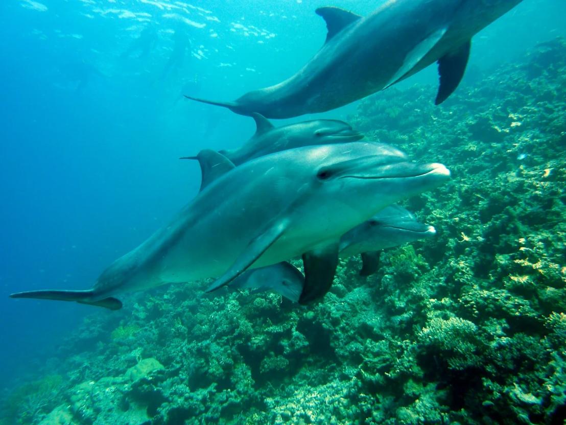 Solo en el Golfo de Vizcaya, han muerto durante el invierno 2018-2019 unos 11.300 delfines comunes como resultado de las actividades de pesca
