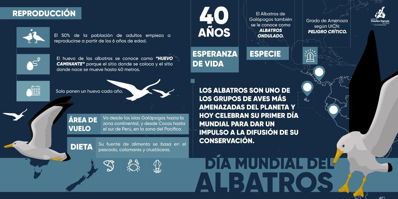 Infografía sobre el albatros de Galápagos. Imagen: Fundación Charles Darwin