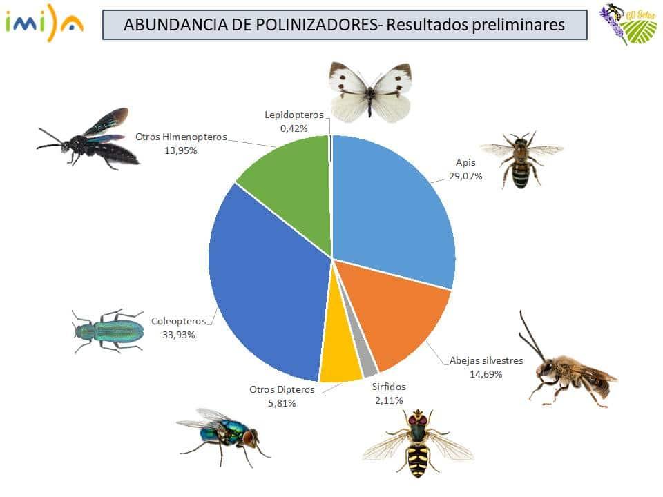 Resutlados preliminares sobre la abundancias de polinizadores. Imagen: Asociación Paisaje y Agricultura Sostenible