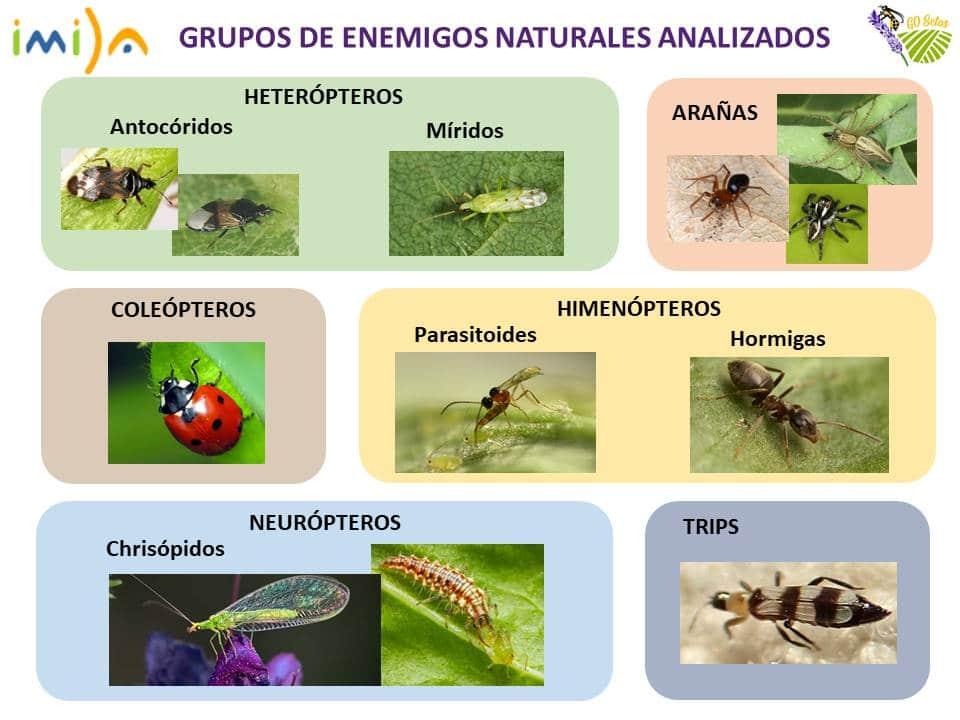 Grupos de enemigos naturales de las plagas analizados. Imagen: Asociación Paisaje y Agricultura Sostenible