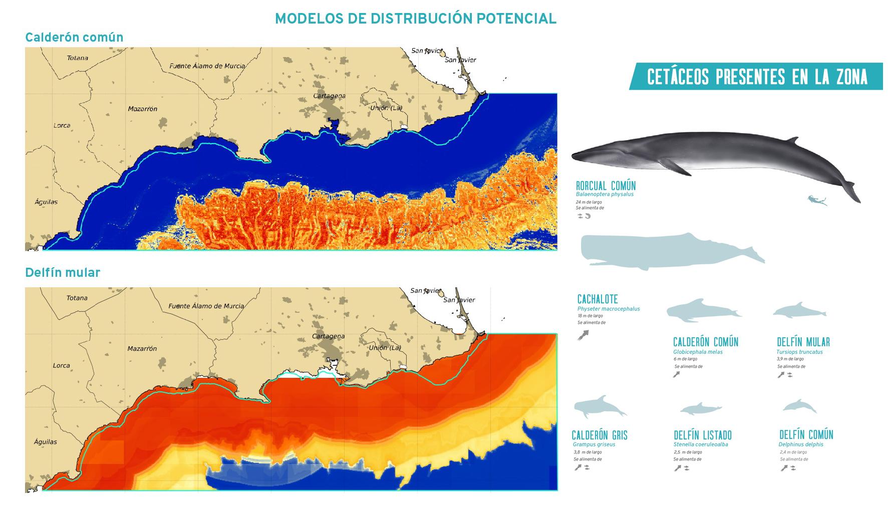 Distribución de alunas especies. Imagen: Camonmar2