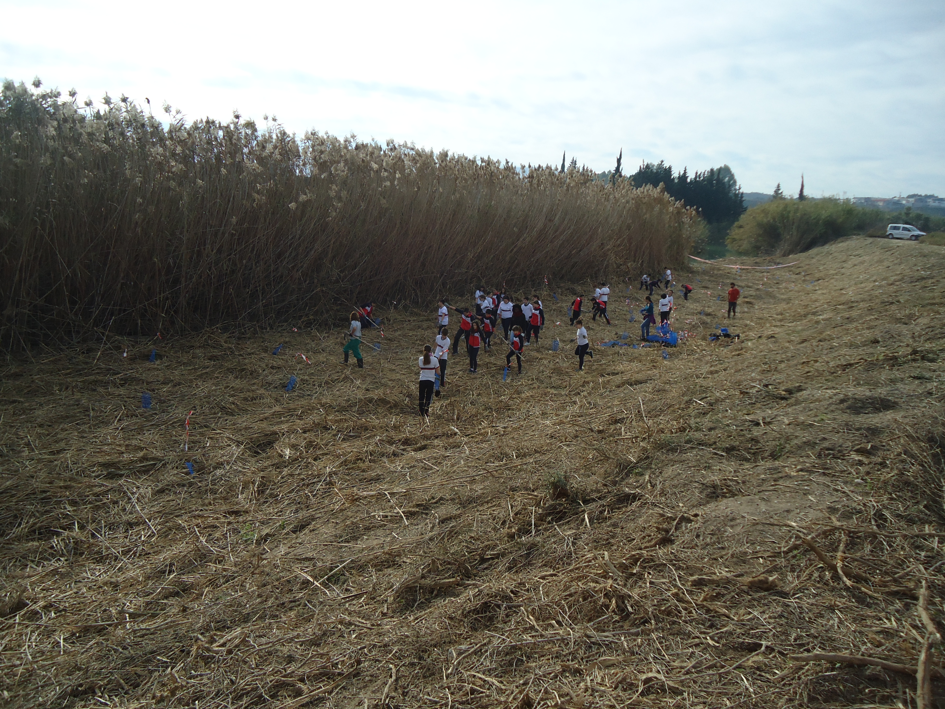 Plantación de bosque de ribera en el río Segura el día 19 de diciembre de 2018. Imagen: ANSE
