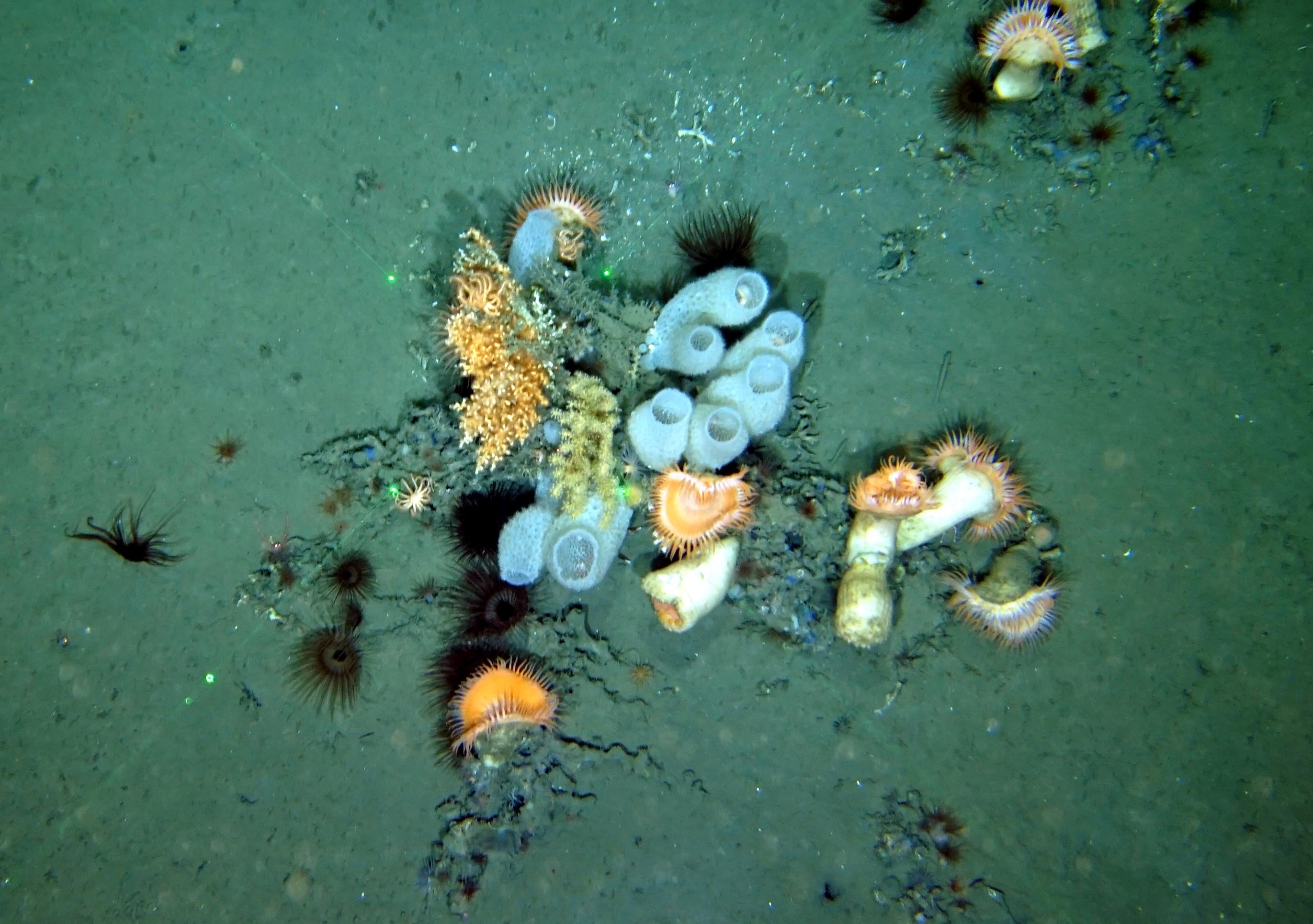 Fondos submarinos profundos recientemente fotografiados por el IEO