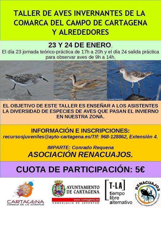 Cartel del Taller de identificación de aves invernantes con la Asociación Renacuajos.