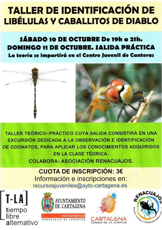 Taller de identificación de libélulas y caballitos del diablo con la asociación Renacuajos