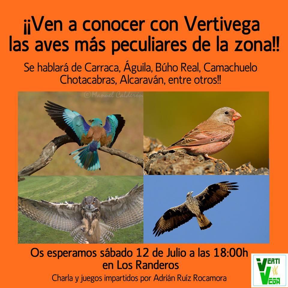Taller sobre aves en Orihuela