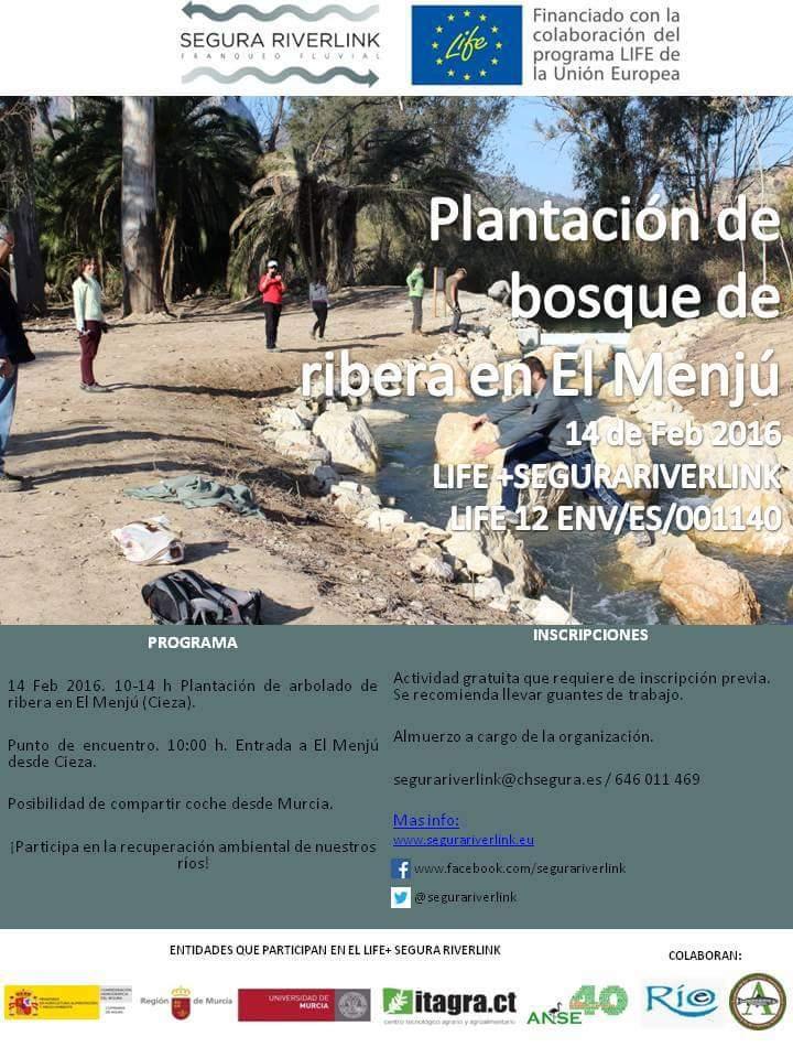 Plantación de bosque de ribera en el Menjú con el proyecto LIFE Riverlink.