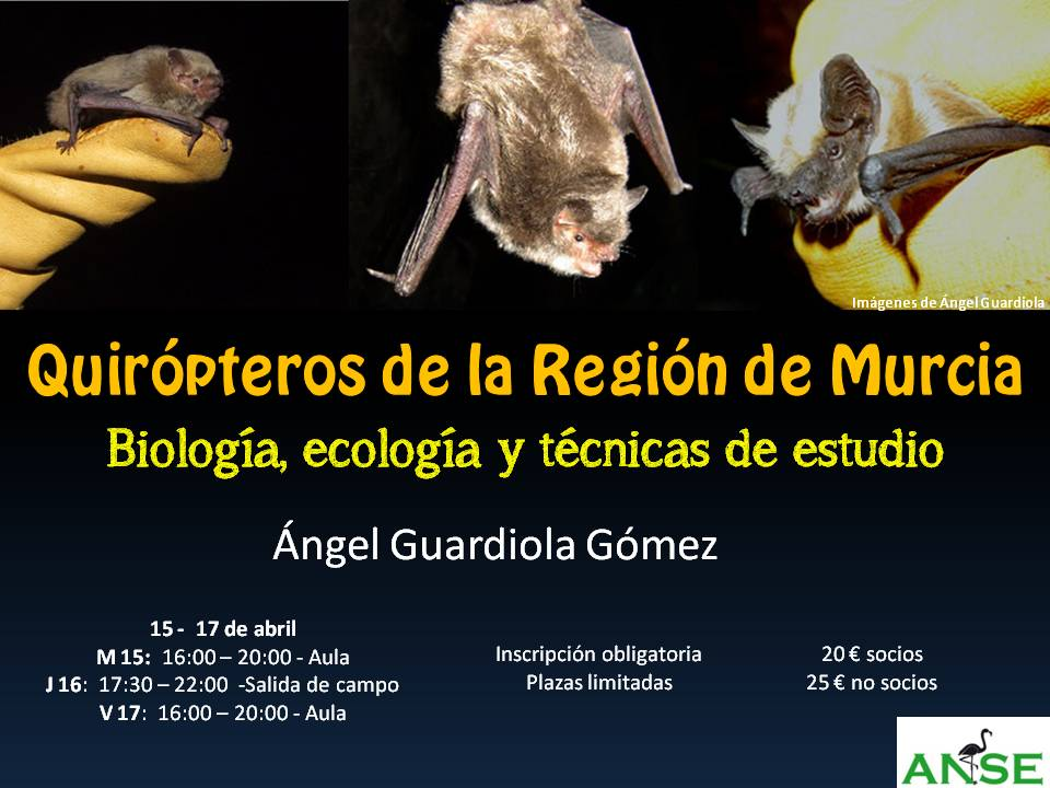 Cartel del curso 'Quirópteros de la Región de Murcia' de ANSE.