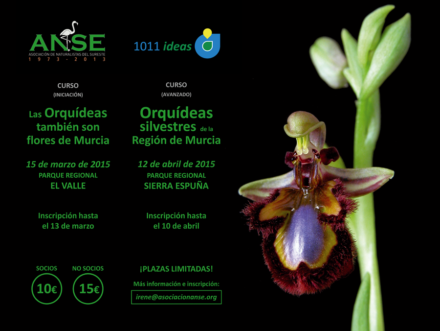 Dos cursos sobre orquídeas con ANSE y 1011 Ideas