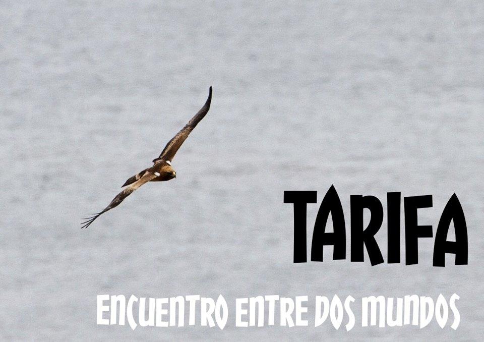 Excursión a Tarifa con Asociación Vida Silvestre Ibérica