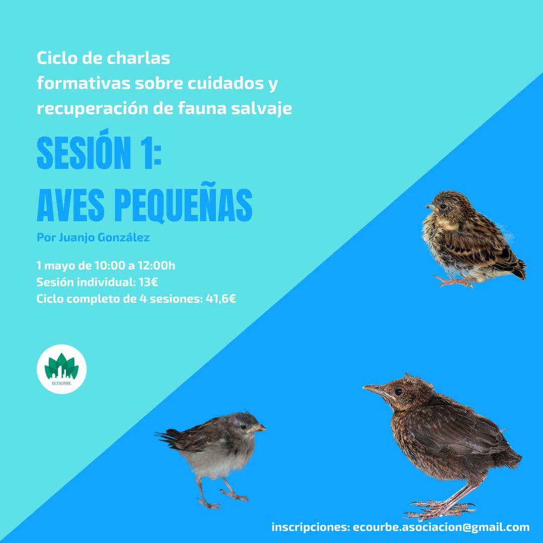 Charla sobre cuidados y recuperación de aves pequeñas, con Ecourbe