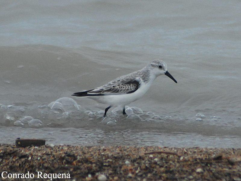 Taller de identificación de aves invernantes con la Asociación Renacuajos.