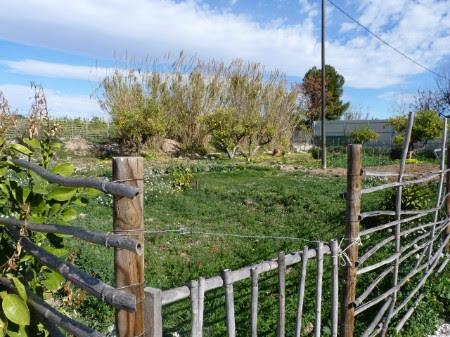 Imagen de unas cañas, que sirven para los aprovechamientos tradicionales en la Huerta de Murcia