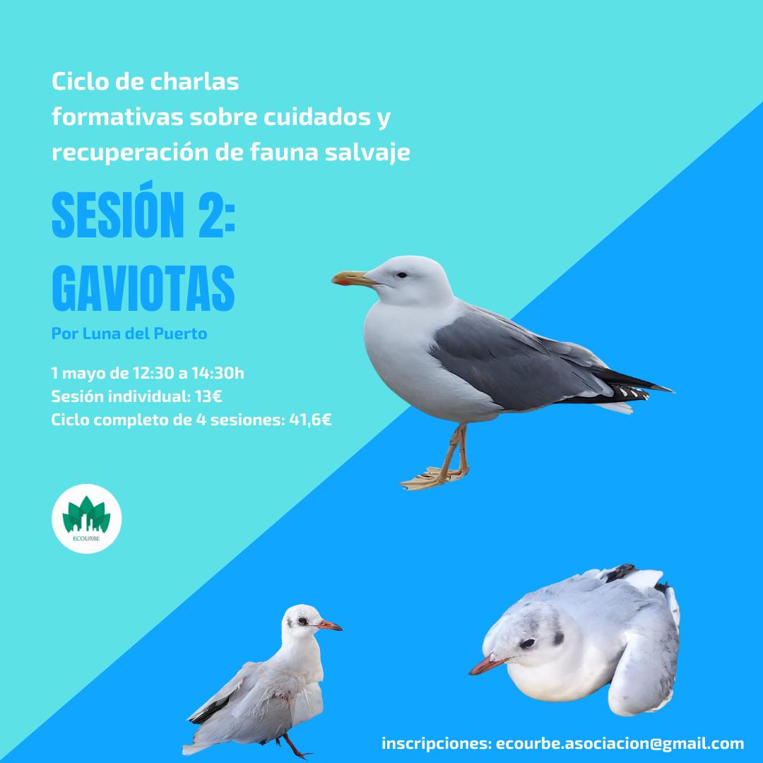 Charla sobre cuidados y recuperación de aves gaviotas, con Ecourbe