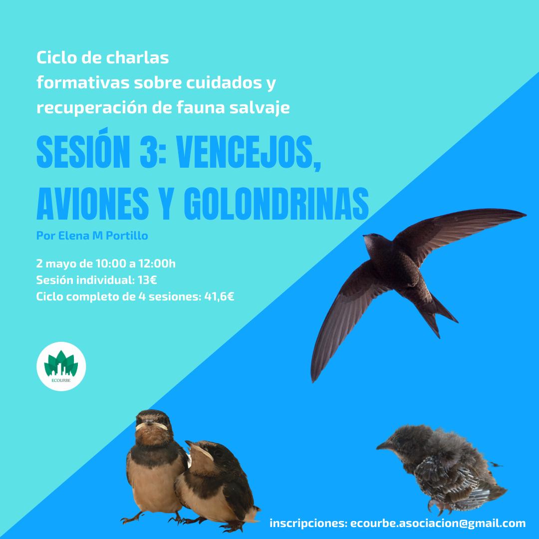 Charla sobre cuidados y recuperación de vencejos, aviones y golondrinas, con Ecourbe
