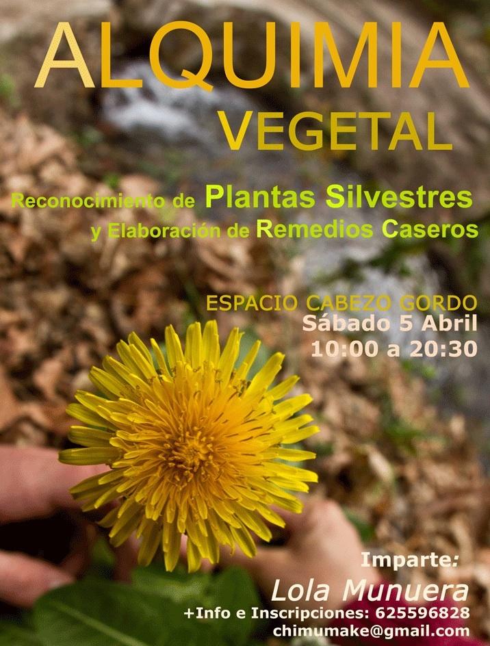 Taller para reconocer plantas silvestres y elaborar remedios caseros