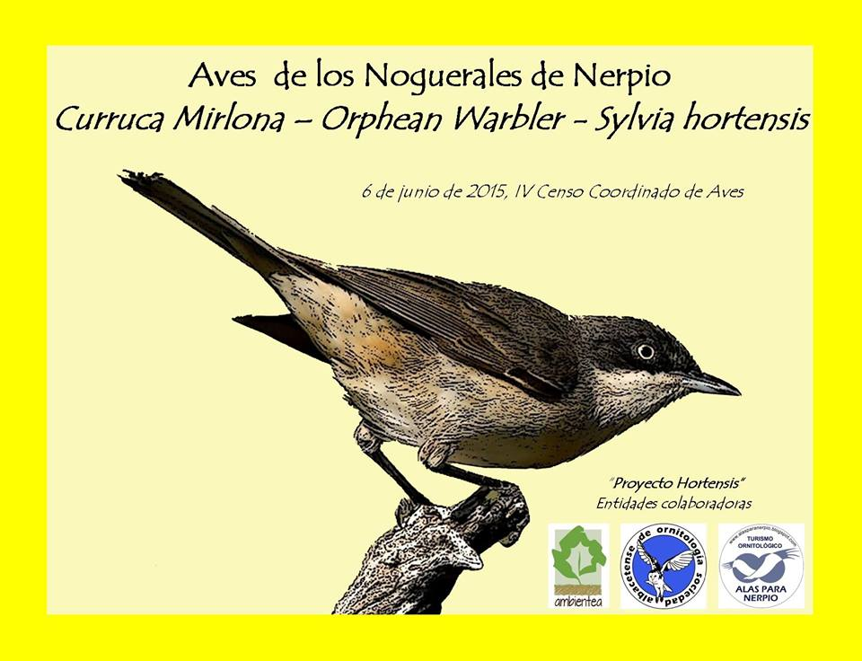Censo  de Aves en Nerpio
