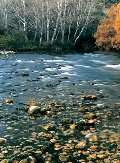 Ruta Interpretada Reserva Natural del Bosque de Cañaverosa con Natur actua.