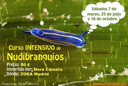 Curso de Nudibranquios en Madrid