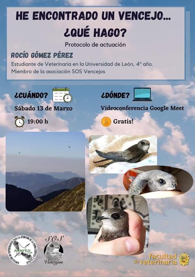 Charla sobre alimentación del vencejo, con SOS Vencejos