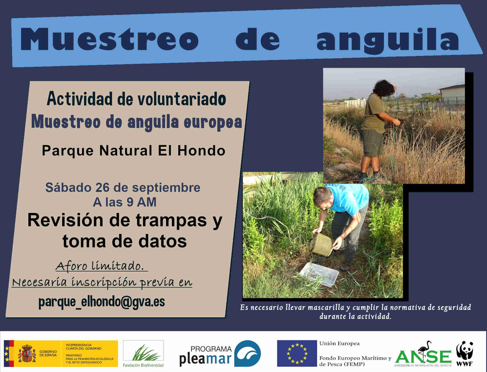 Muestreo de anguila europea en El Hondo, con ANSE