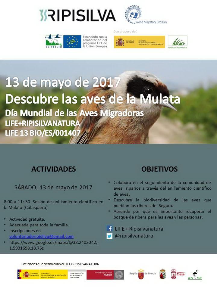 Anillamiento por el Día Mundial de las Aves Migratorias , con LIFE Ripisilvanatura