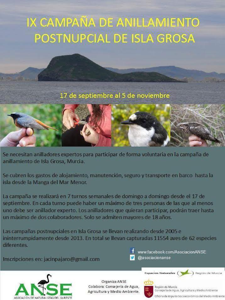 Voluntariado de anillamiento de aves en una isla, con ANSE