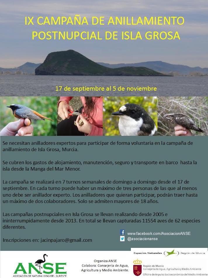 Se buscan anilladores expertos de aves para voluntariado en isla Grosa, con ANSE