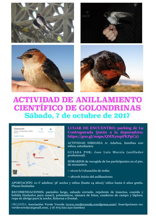 Anillamiento científico de golondrinas, con Verde Vereda