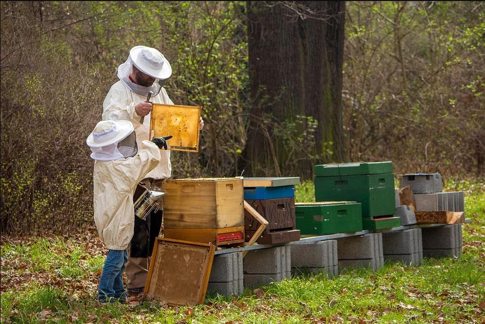 Iniciación a la apicultura tradicional y ecológica, con el CIFEA de Lorca