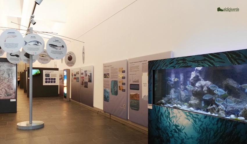 Exposición sobre acuicultura en el Museo Nacional de Arqueología Subacuática