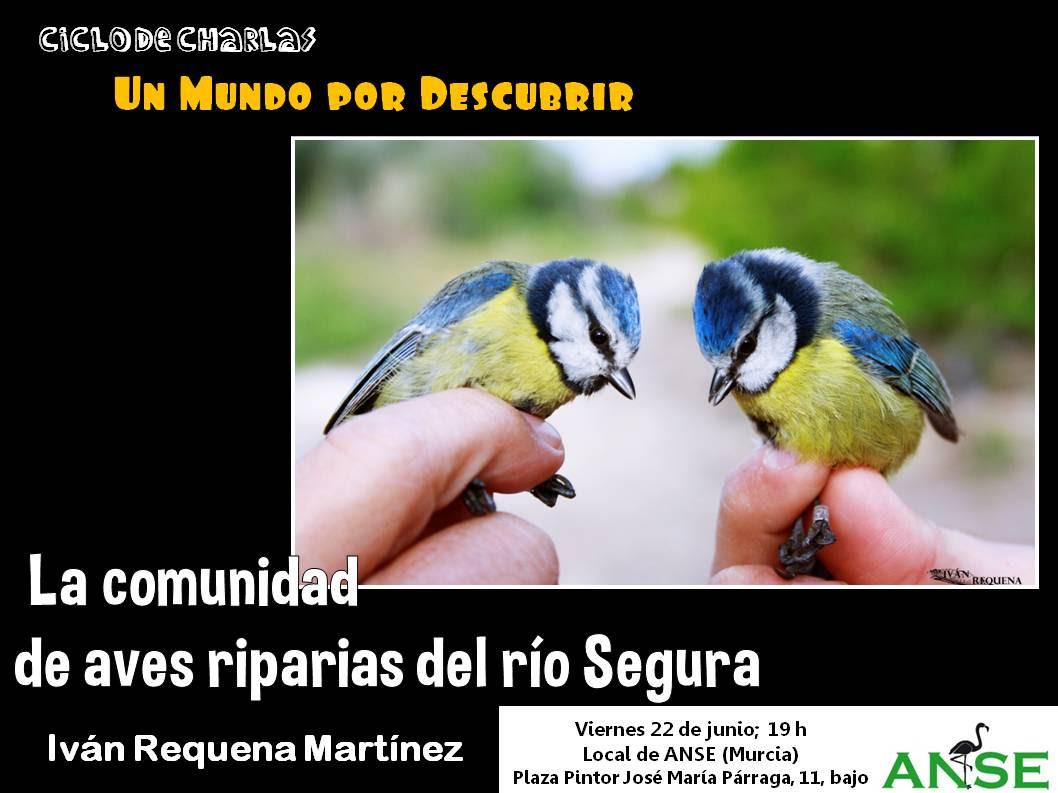 Aves riparias del Segura, con ANSE