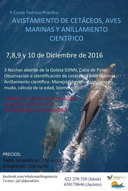 Curso de Avistamiento de cetáceos y más, con Calderón Gris