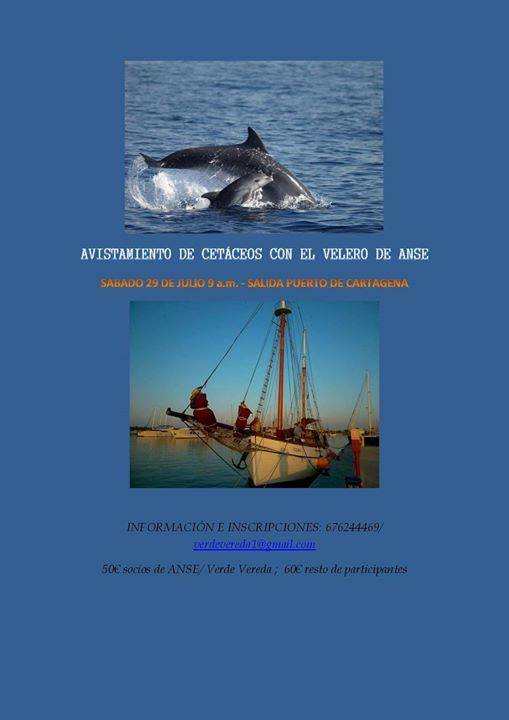 Avistamiento de cetáceos en velero, con Verde Vereda