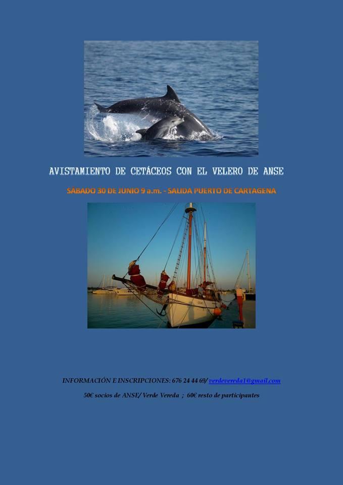 Avistamiento de cetáceos en velero , con Verde Vereda