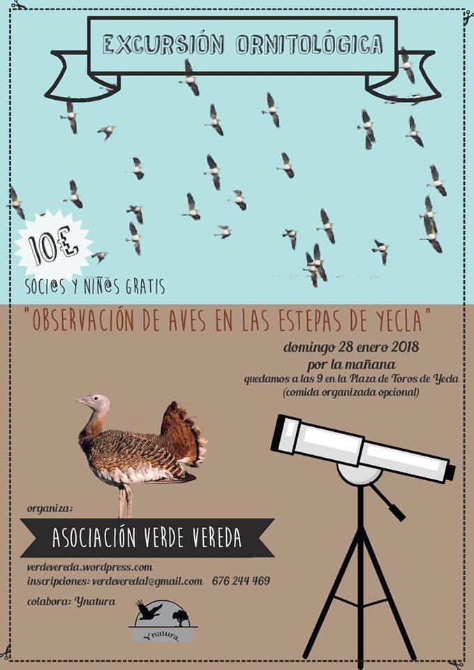 Observación de aves en las estepas de Yecla, con Verde Vereda