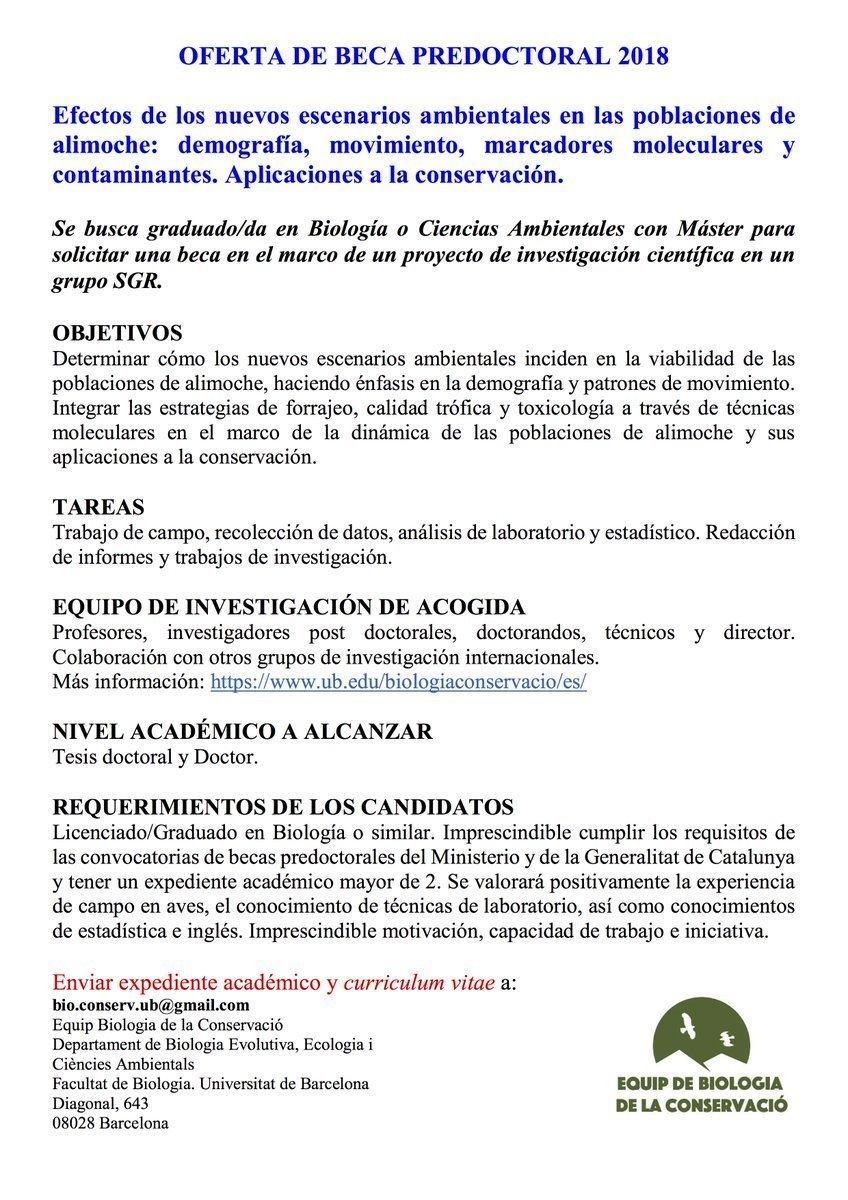 Beca predoctoral sobre el alimoche, con la Universidad de Barcelona