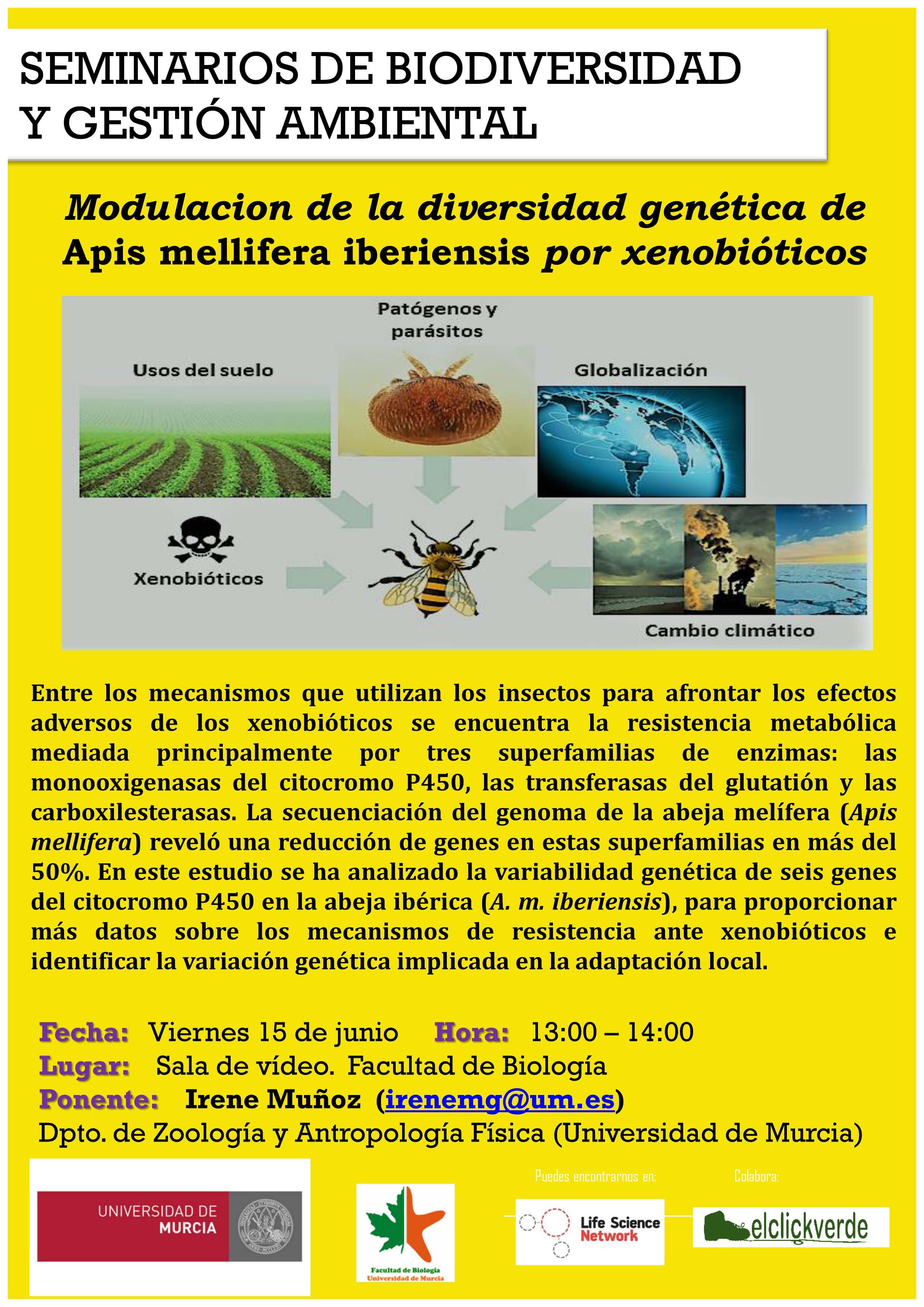 Charla sobre abejas, diversidad genética y resistencia, con la UMU