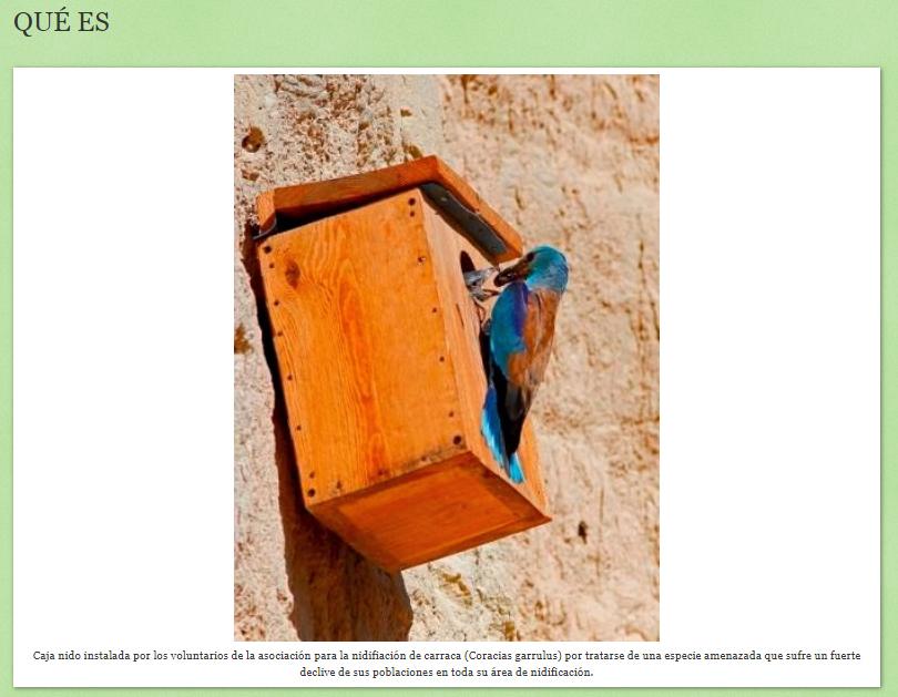 Aspecto de la web Arramblando por la Carraca, con una imagen de una carraca y una caja nido, de Julián Rico