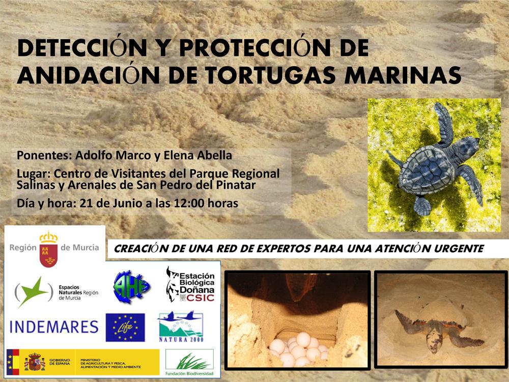 Jornada técnica para la detección, atención urgente y protección de tortugas marinas, con la CARM