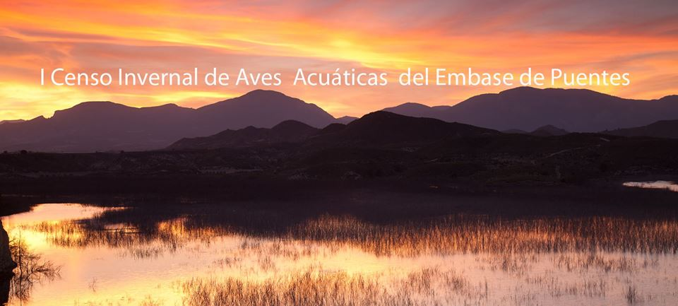I Censo Invernal de aves Acuáticas del Embalse de Puentes, con Naturactúa-Naturalistas lorquinos